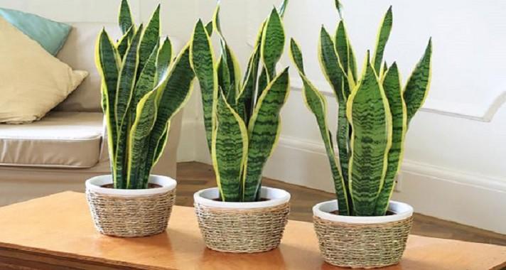 plantas-que-ajudam-a-dormir-melhor